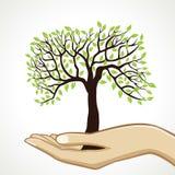 绿色结构树在手边 库存图片