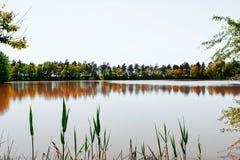 绿色结构树在湖反射了 俄国本质 蓝色多云秋天域横向偏僻的天空结构树黄色 免版税库存照片