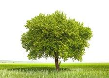绿色结构树-绿色行星地球的符号 图库摄影
