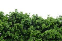 绿色结构树 库存照片