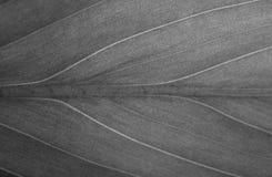 绿色美好的叶茂盛纹理 免版税图库摄影