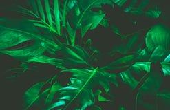 绿色背景概念 留下掌上型计算机热带 免版税库存照片