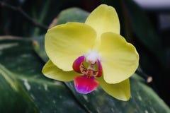 绿色背景的美好的紫色黄色花关闭 免版税图库摄影