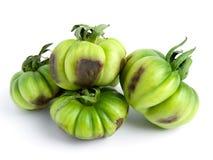绿色腐烂的蕃茄 免版税库存照片