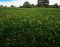 绿色自然叶子和植物 免版税库存照片