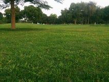 绿色自然叶子和植物 库存照片