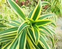 绿色自然叶子和植物 免版税库存图片