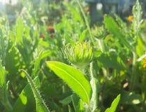 绿色自然叶子和植物 免版税图库摄影