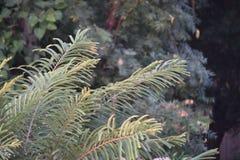 绿色自然场面 免版税库存照片