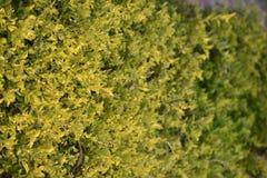 绿色自然场面 图库摄影