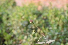 绿色自然场面 库存照片