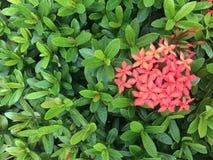 绿色自然样式背景概念 图库摄影