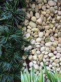 绿色自然样式背景概念 免版税图库摄影