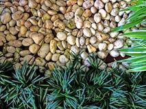 绿色自然样式背景概念 免版税库存图片