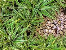 绿色自然样式背景概念 库存图片