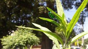 绿色臭虫 库存照片