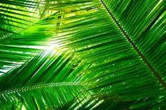绿色舱内甲板在白色背景放置热带棕榈叶分支 免版税库存照片