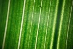 绿色花叶子,宏观photoghaphy 图库摄影