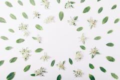 绿色花和叶子有一个圆的框架的文本 库存照片