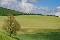 绿色苏克塞斯风景 库存照片