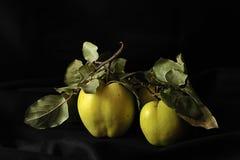 绿色苹果静物画 免版税库存照片