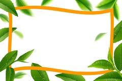 绿色茶叶传染媒介自然背景 图库摄影
