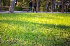 绿色草坪在晴朗的光下的城市公园 库存照片