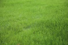 绿色草坪拷贝空间 库存照片