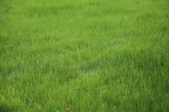 绿色草坪拷贝空间 免版税图库摄影