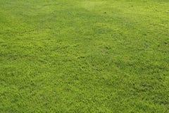 绿色草坪 免版税库存照片