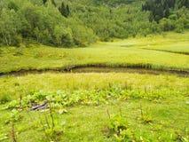 绿色草甸和河 免版税库存照片