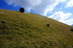 绿色草甸和美丽的阿尔卑斯/南部蒂罗尔在意大利 免版税库存照片