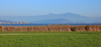 绿色草甸和芦苇在湖Obersee, Hurden 秋天天在Swi 库存照片