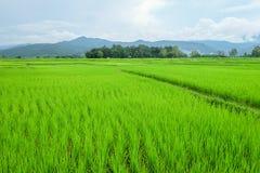 绿色草甸和蓝色山 免版税库存图片