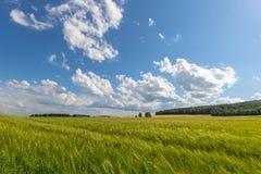 绿色草甸在与云彩的蓝天下 库存照片