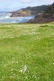 绿色草甸海洋和平的滚 免版税库存照片