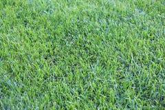 绿色草甸细节纹理 库存图片