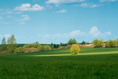 绿色草甸结构树 库存照片