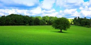 绿色草甸结构树 免版税库存图片