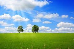 绿色草甸结构树 免版税图库摄影
