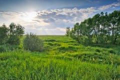 绿色草甸结构树 图库摄影