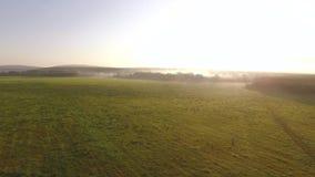 绿色草甸顶视图多小山平原的在乡下在早晨薄雾和天空蔚蓝背景中 英尺长度 美丽如画 股票录像