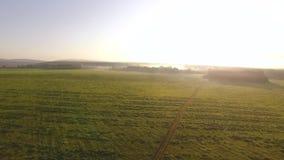 绿色草甸顶视图多小山平原的在乡下在早晨薄雾和天空蔚蓝背景中 英尺长度 美丽如画 影视素材