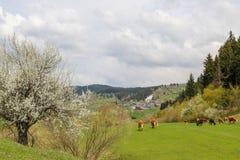 绿色草甸,马,母牛,绵羊 图库摄影
