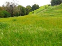 绿色草甸 库存照片