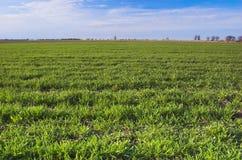 绿色草甸 免版税图库摄影