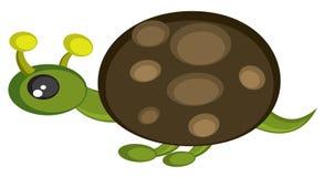 绿色草龟 免版税图库摄影
