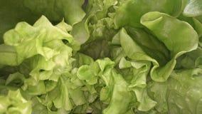 绿色莴苣叶子抽象形状  沙拉叶子接近的看法  都市种田,健康吃生活方式 影视素材