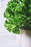 绿色莴苣在白色砖墙,在厨房用桌,空间嘲笑上的新鲜的健康沙拉食物背景离开,节食叶子 免版税库存照片
