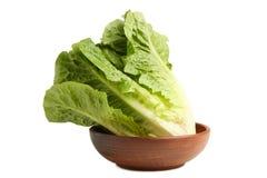 绿色莴苣长叶莴苣 免版税库存照片